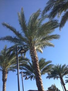 Palmen Liebe