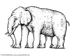 elefant-fuenf-beine